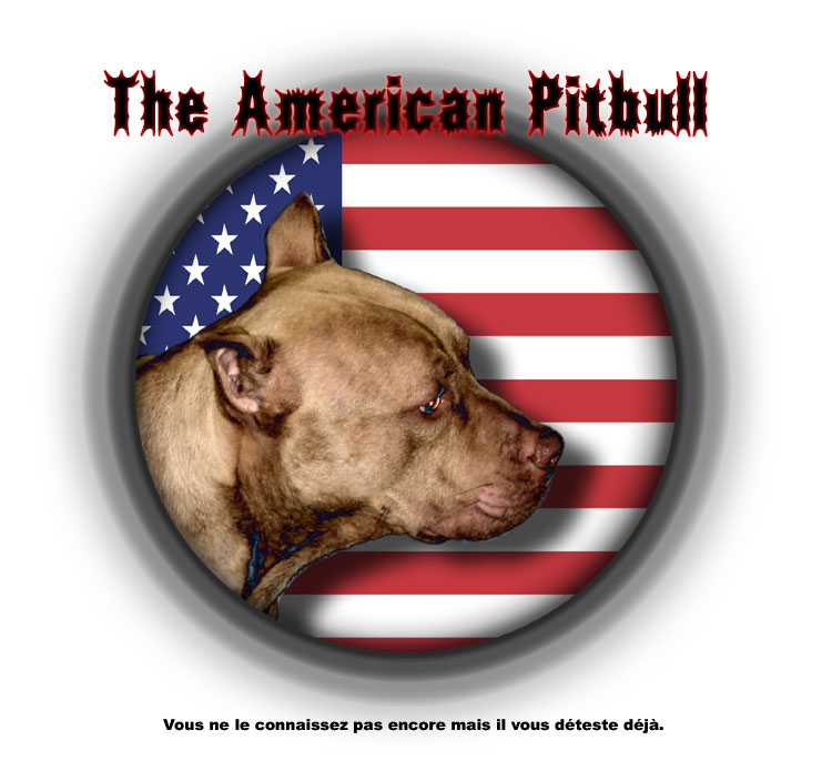 The american pitbull  de Zayed