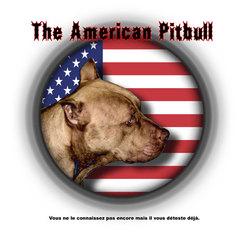 The american pitbull