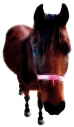 Equus #2